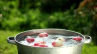 In the empty basin of water throwing apples video