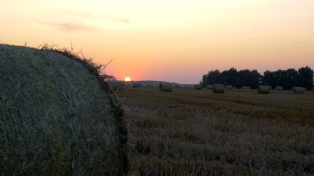 In the field lie haystacks. video