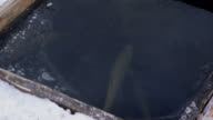 In trout farm the opening under the ice fish swim the winter video