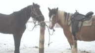 In winter, the horses standing at the hitching post video
