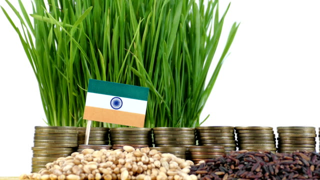 India flag waving with stack of money coins and piles of wheat video