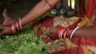 Indian Woman Cleaning Edible Leaves video