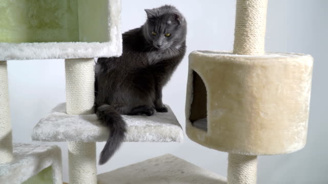 Indoor playground for cats and kittens video