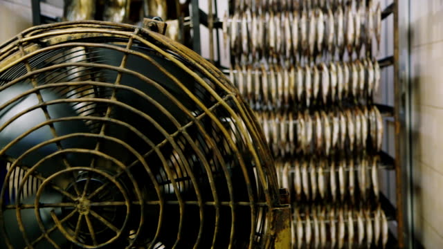 Industrial fans for drying fish video