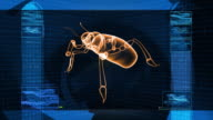 Insect Bug X-Ray Scan Technology video