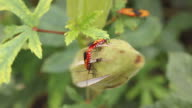 Insect Couple. video