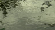 Insect Water skaters video