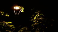 Insects Around Street Lamp video
