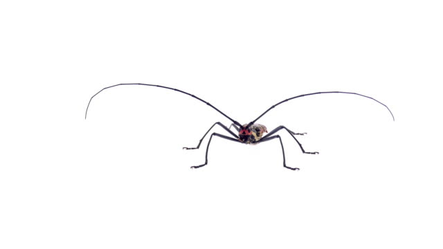 Insects bug on white background video