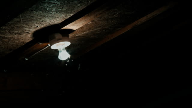 insects fly to the light bulbs video