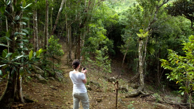 Inside a Forest in Mauritius video