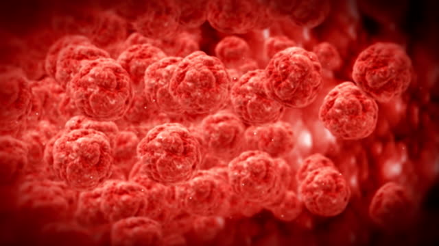 Inside human body,red blood cells,highly detailed texture video