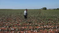 Inspecting the Cotton Crop video