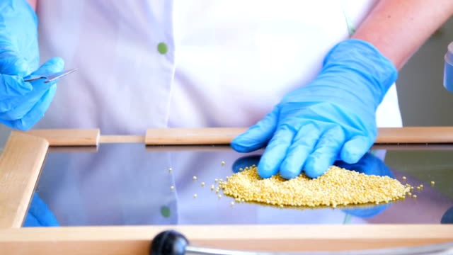 inspector takes a sample in a laboratory - looking for quality millet video