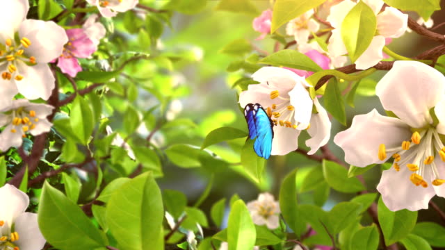 Intro with Butterflies and Blossoming Flowers video