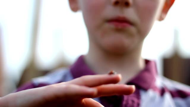 Investigating Lady Bird video