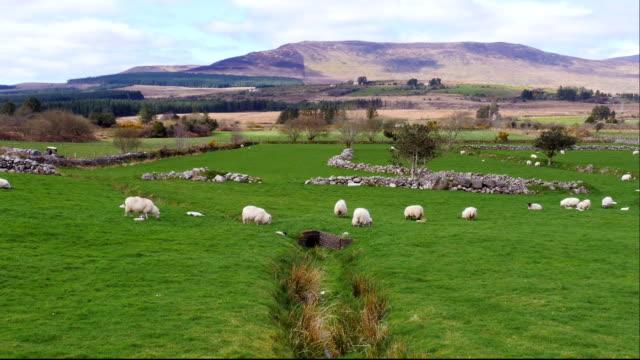 Irish countryside video