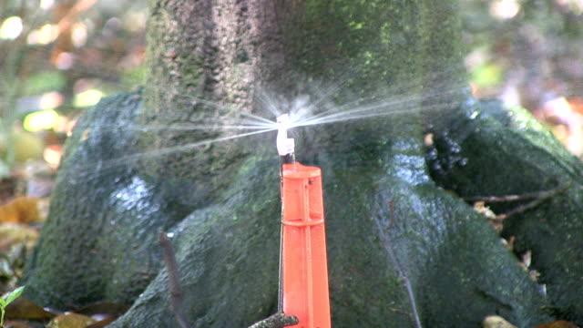 Irrigation at an orange grove video