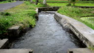 irrigation canal video