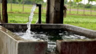 Irrigation in the field of cauliflower video
