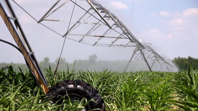 Irrigation of corn fields video