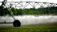 Irrigation sprinklers over cultivated land. video