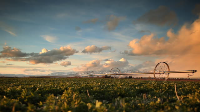 Irrigation system and crops at sunset. Agriculture background. video