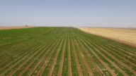Irrigation system in the desert of Israel video