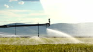 Irrigation system waters the summer crops video