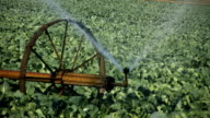 Irrigation (HD) video