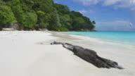 HD island sea beach video