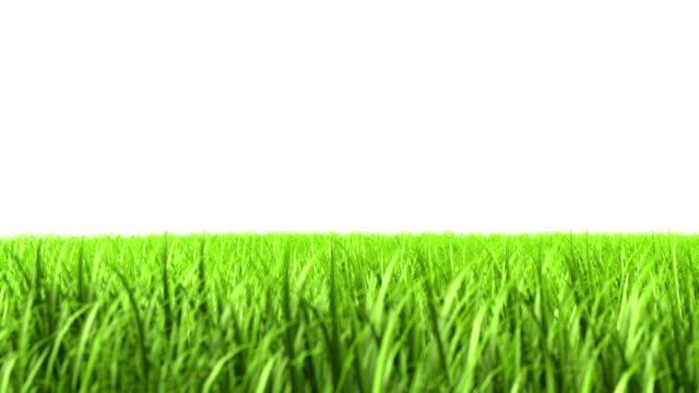 Isolated grass video