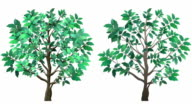 Isolated Growing Tree Animation video
