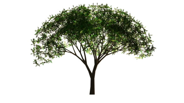 Isolated object. Growing tree on white background. video