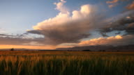 isolated rain storm over wheat field at sunset video
