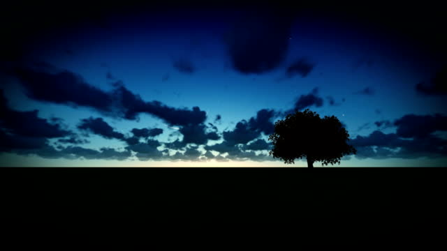 Isolated tree on green meadow, time lapse night to day video