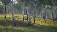 It is beautiful landscape of growing in wild nature forest video