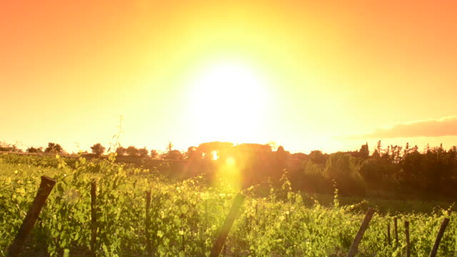 Italy vineyard at sunset - Tuscany land video