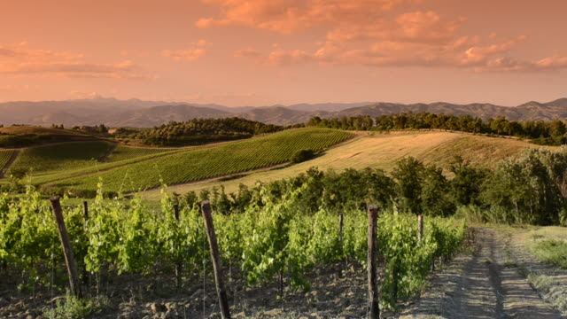 Italy vineyard at sunset video