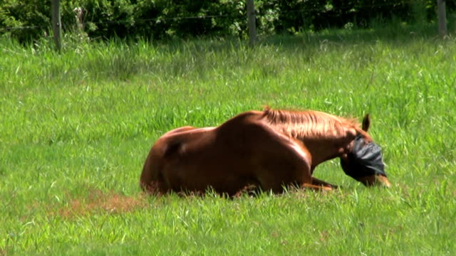 Itchy Blind Horse In Green Field (HD 1080p30) video