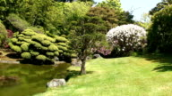 Japanese garden video