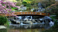 Japanese Garden with bridge and waterfall video