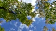 Japanese leaves video