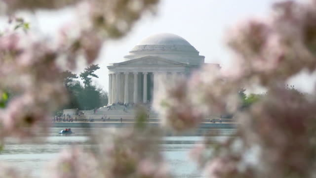 Jefferson Memorial and cherry blossoms video