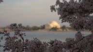 Jefferson Memorial Out of Focus in Background video
