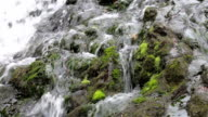 Jet forest stream, the stones and moss. video