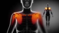 SHOULDER joint skeleton x-ray scan in black video