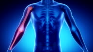 ELBOW joint skeleton x-ray scan in blue video