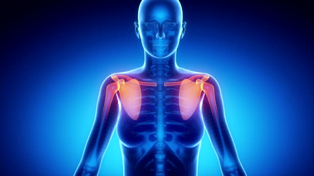 SHOULDER joint skeleton x-ray scan in blue video