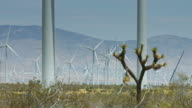 Joshua Tree in Shadow of Wind Turbines video